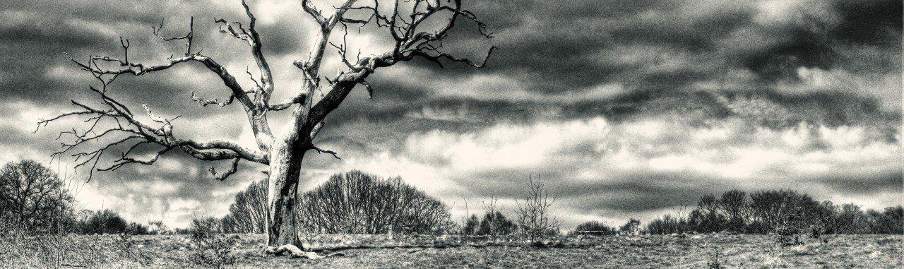 lone_tree_on_heath